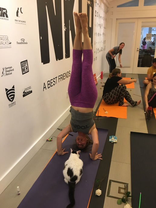 Headstand and kitty
