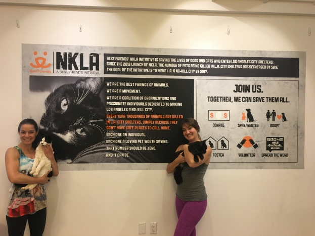 NKLA Best Friends Yoga Class with Adoptable Cats